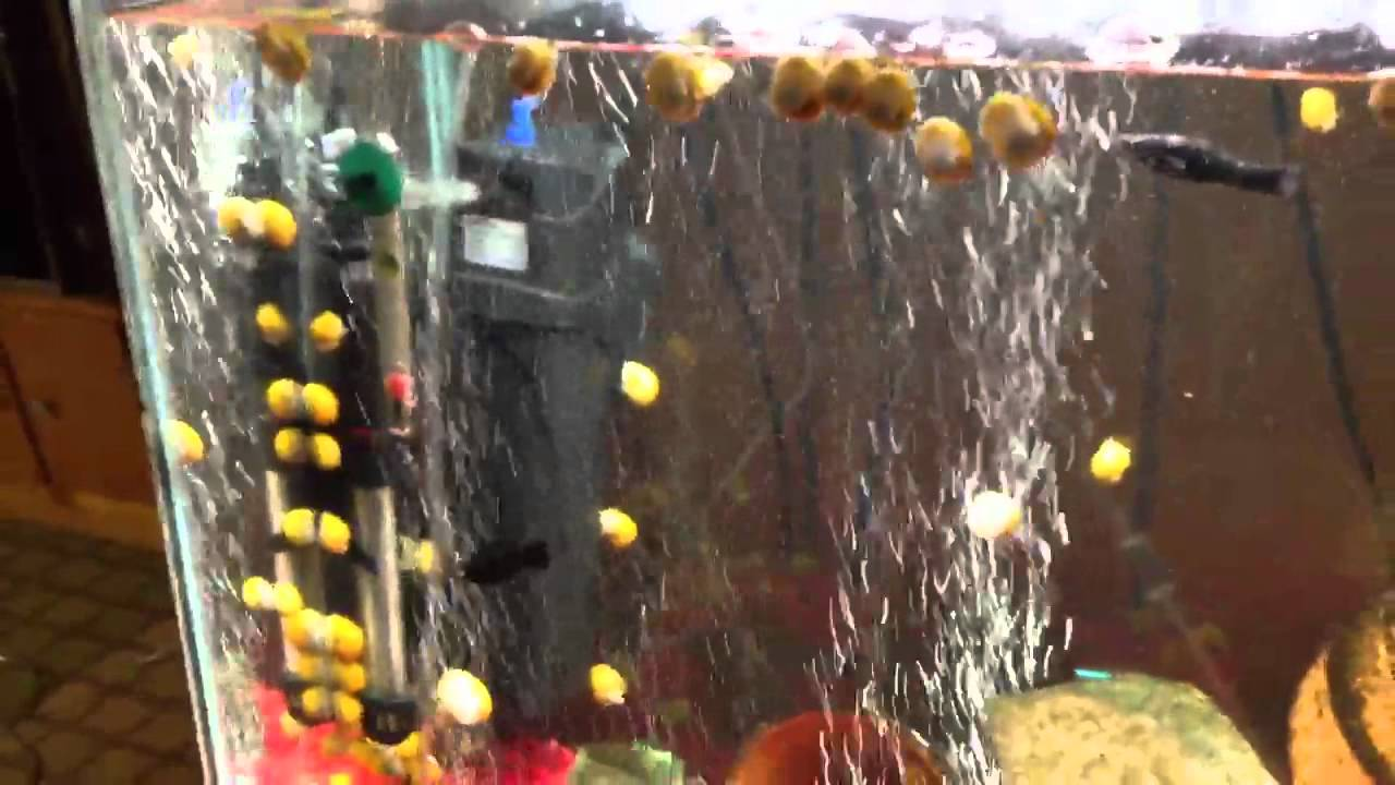 Secret to clear aquarium water youtube for Clear water fish tank