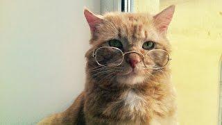 Эти забавные котики #1/This is Funny Cat(CatsLIVE)
