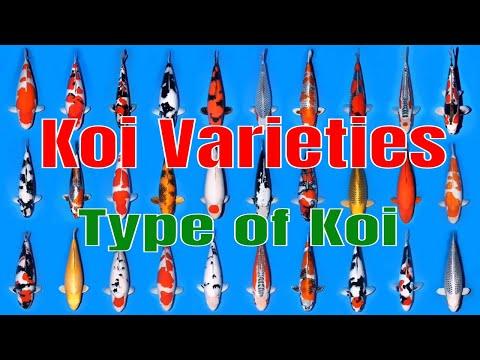 Koi Varieties List - Type of Koi