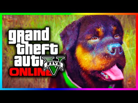 GTA 5 Online - Where Are The Animals & Pets?!? Why Rockstar Should Add Them! (GTA V)