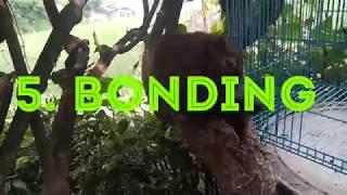 Cara agar tupai kelapa tetap jinak & Bonding  #tupaikelapa #bajingkelapa