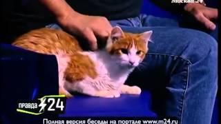 Армен Джигарханян: «Кот прожил 30 лет»