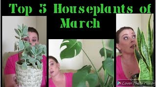 Top 5 Houseplants of March | 2019