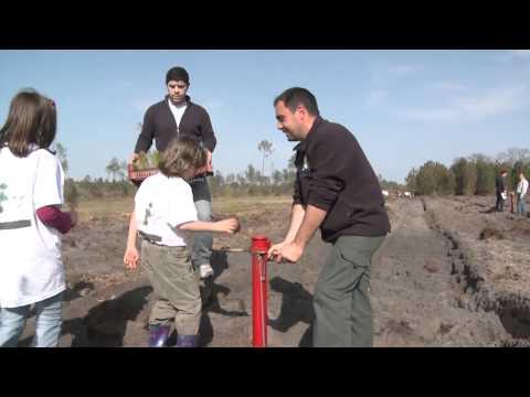 """""""Mamie chaussette"""", la grand-mère qui replantait des arbres à 800 km de chez elle"""
