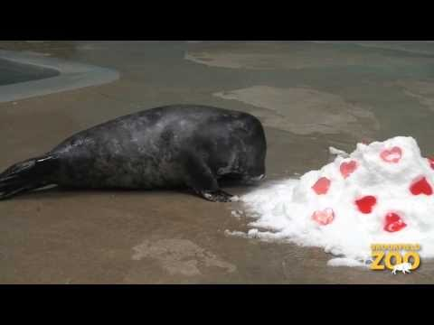 Brookfield Zoo Animals Receive Valentine's Day Treats