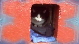 СПАСИ ДВУХ КОТОВ - ФЕЛИКСА И ТАЙГЕРА / SAVE TWO CATS - FELIX AND TIGER