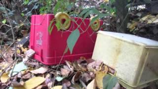Igelfreundlicher Garten im Herbst