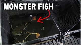 Transferring *EXOTIC* FISH to store!!!