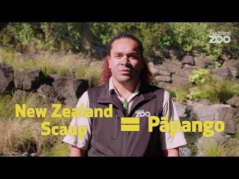 Rātū Māori with Hōhepa - pāpango