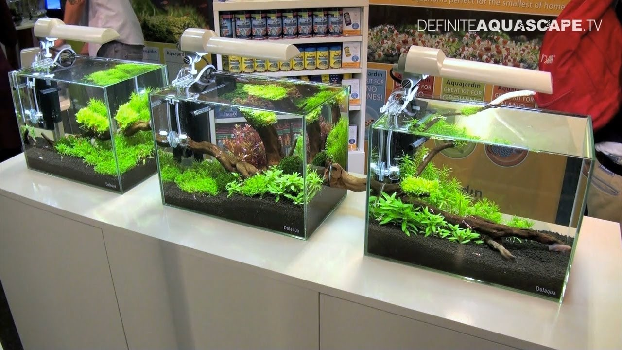 Aquascaping Aquarium Ideas From Aquatics Live 2011 Part 1 Youtube