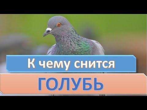 К чему снится голубь | СОННИК