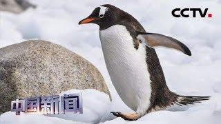 """[中国新闻] 新闻观察:南极将不再""""难以企及"""" 中国开放赴南极长城站旅游申请   CCTV中文国际"""