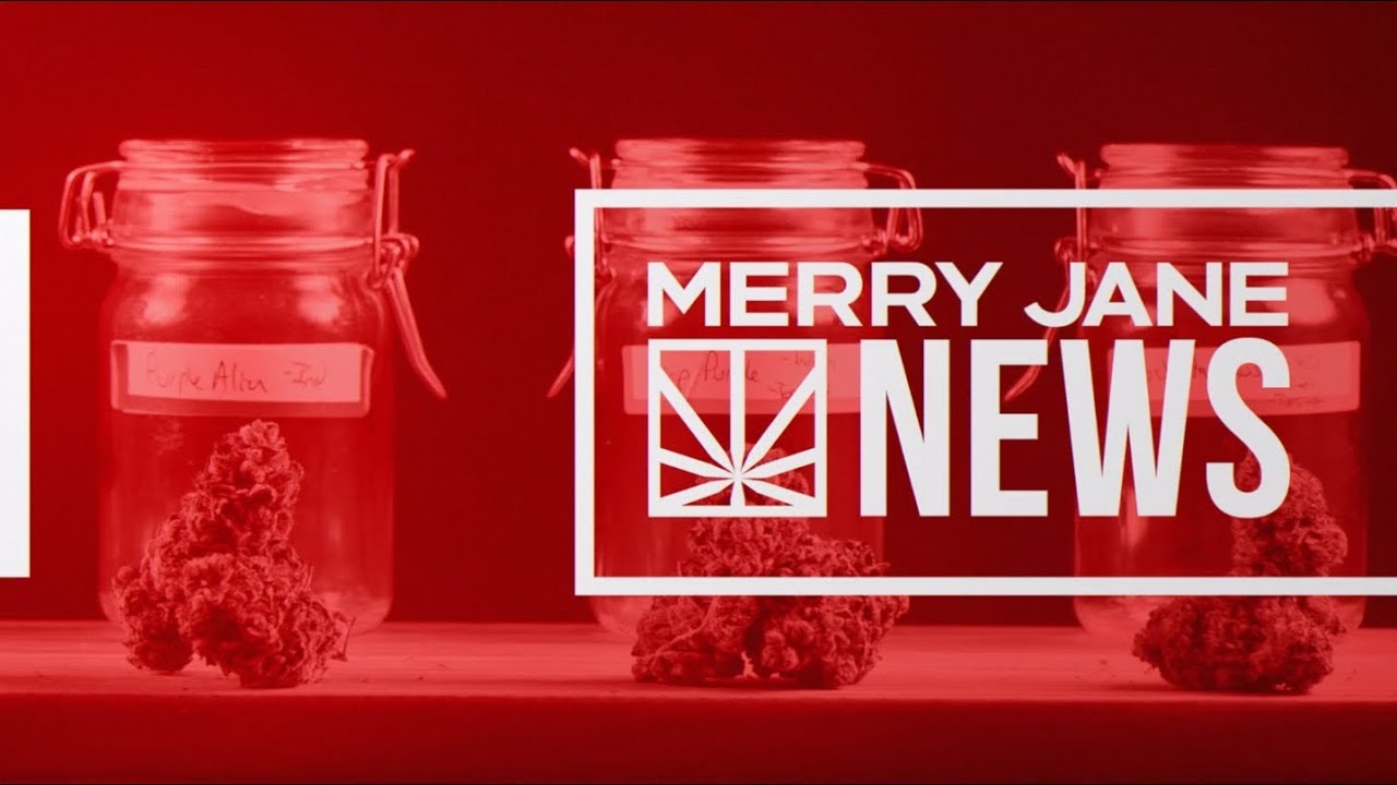 Traveling with Legal Cannabis Over the Holidays? Here Are Some Tips | MERRY JANE NEWS