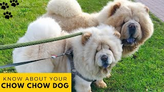 Chow Chow Dog : Dog Facts, Health Problems, Recommended Exercise