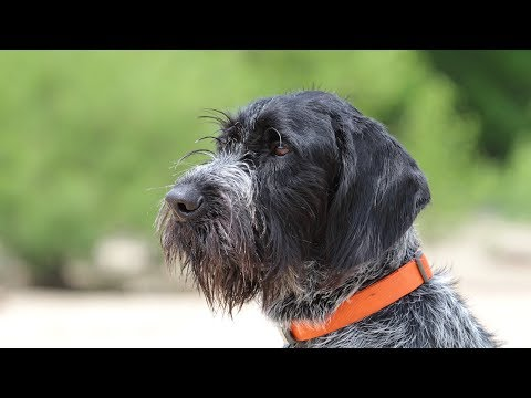 Professional Dog Training - Patience is a Virtue