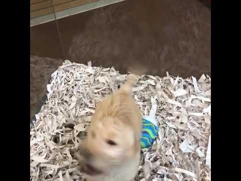 Temecula Puppies Youtube