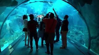 Dubai Mall Aquarium And Underwater Zoo 2018