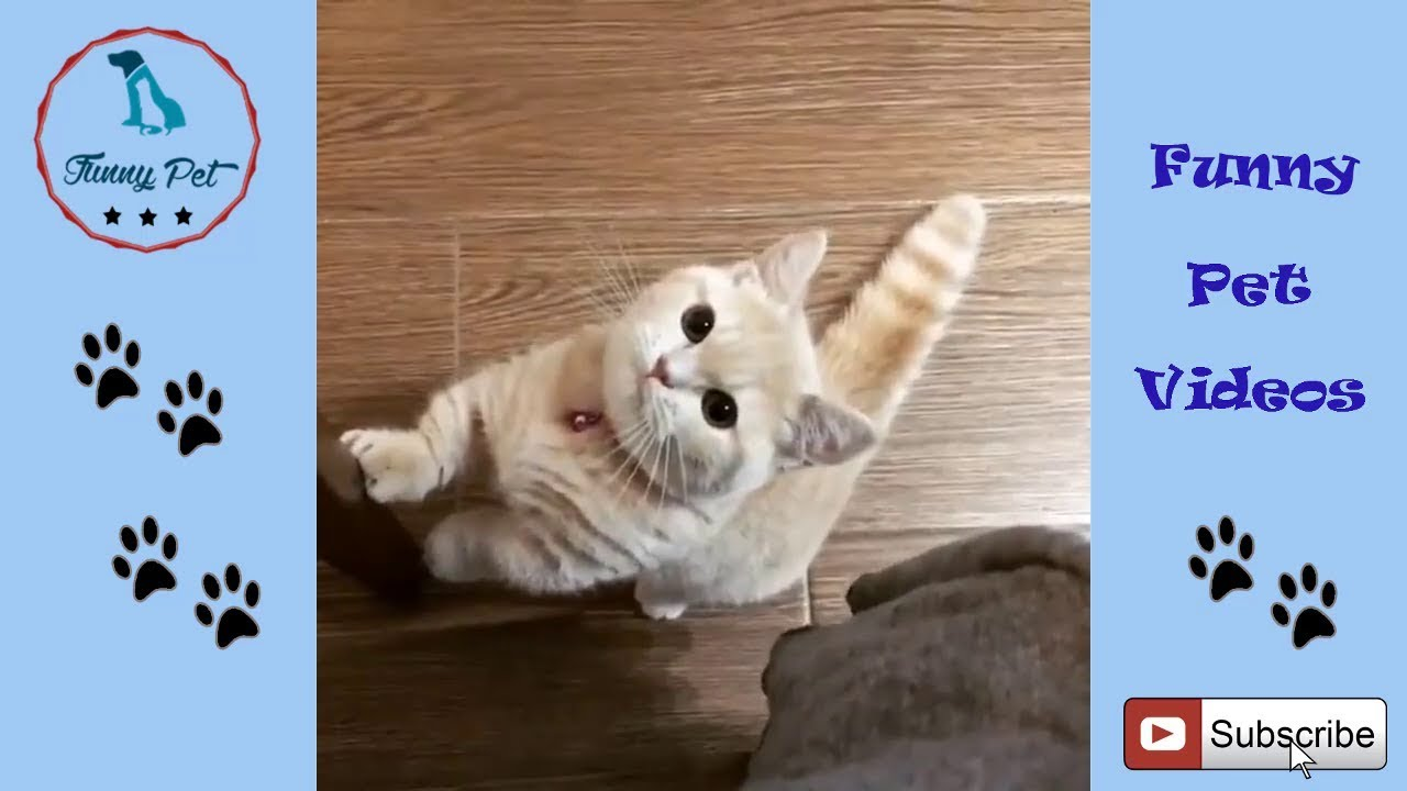 Cute Cat Videos For Kids Cat Videos For Kids To Watch Funny