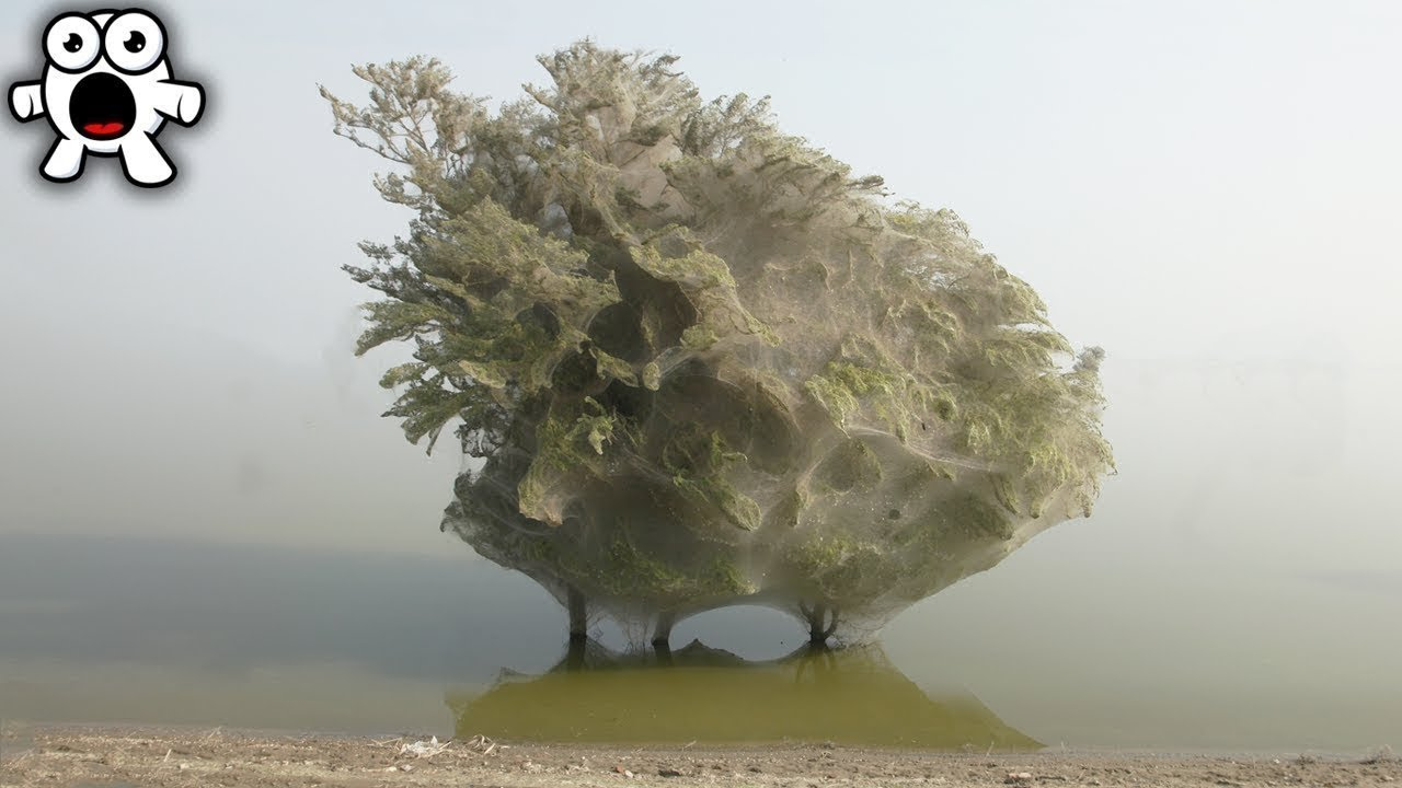 If You See This Ghostly Tree, RUN FOR YOUR LIFE
