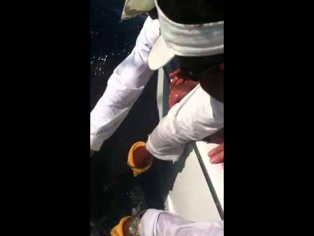 Richard Turner feeding a million dollar thumb to a 7 foot Sailfish