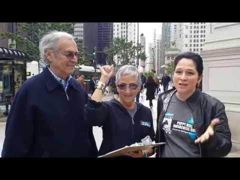 Collecting Petitions on Michigan Ave for Chicago City Clerk Susana A. Mendoza