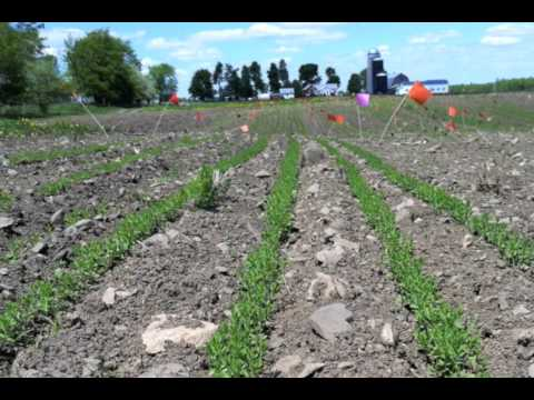 Growing Flax in the Northeast