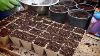 Jak uprawiać baklażana?