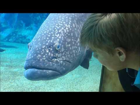 Aquaya - at Ushaka Marine World in Durban