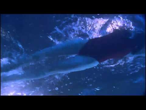 Kristin Kreuk, ankle grab underwater (Smallville)