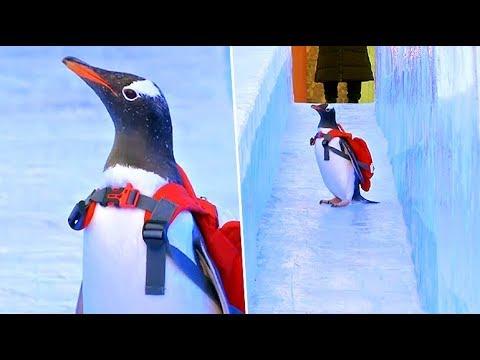 Jessie - Penguins Enjoy China's Giant Ice Festival