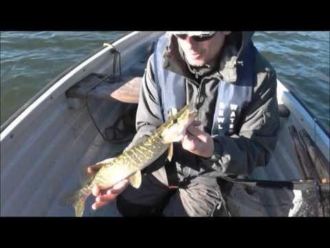 Pike Fishing, Bewl Water