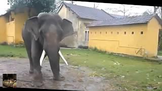 прикол с слоном, жесткие приколы