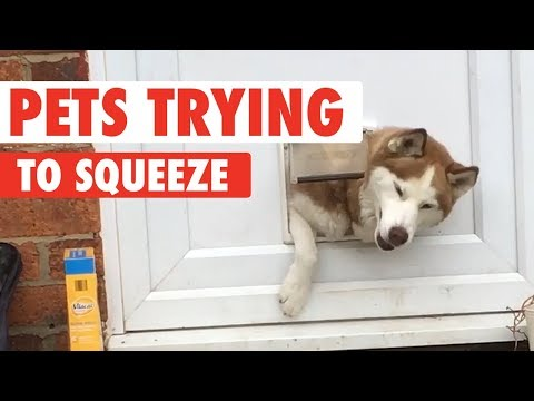 Fluffy Pets Squeezing Through Small Spaces
