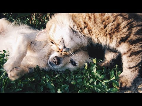 😸 Funny Cats vs 🐶 Dogs Compilation 😍 Awesome Animals