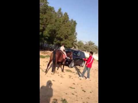 ali shirali horse riding
