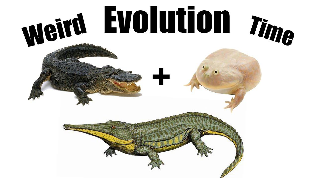 How Evolution Made Toads Behave like Crocodiles