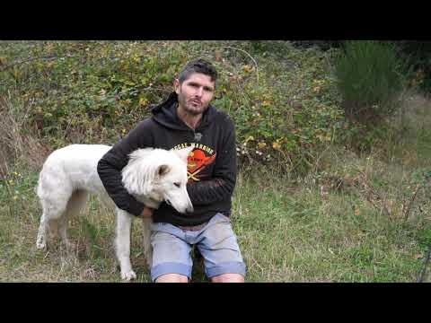 TI2018 Ep4 - A vous la parole ! Rumba le chien régénéré vous raconte !