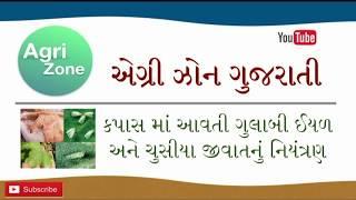 કપાસ માં આવતી ગુલાબી ઇયળ અને ચુસીયા જીવાત નું નીયંત્રણ | Agri Zone Gujarati