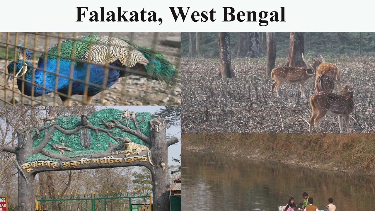 Kunjanagar Eco Park, Falakata (West Bengal) by bijohnAdams