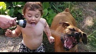 Приколы с Котами смешные видео. Смешные Коты до Слез. Смешные Животные # 4