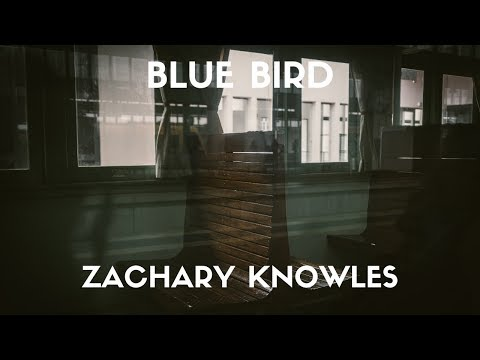 Zachary Knowles - blue bird