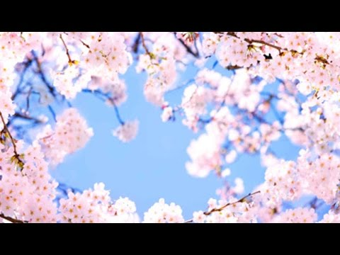 Peach blossom field drives tourism boom in Zhejiang
