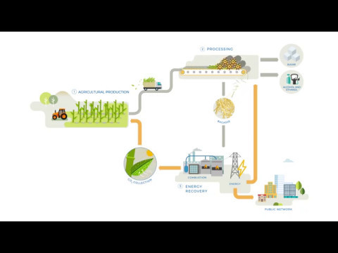 Sugar cane : A source of renewable energy