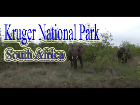 Kruger National Park  | Top Attractions in South Africa | Animals watching destinations South Africa