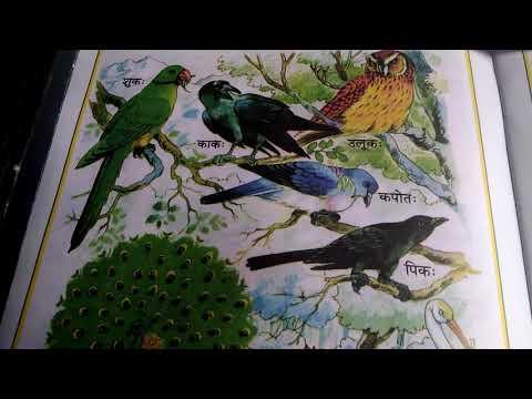 10 Name of birds in sanskrit
