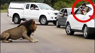 [Best Animal Fights]  [Wild Animal Attack]  Animals Attack Cars ★ Animals Attacking Humans Compilat