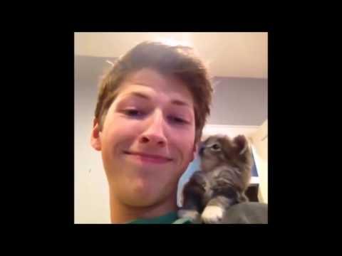 Los Videos de gatos más chistosos (2017). Videos para morir de risa de gatos muy graciosos
