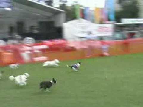 Amelie Small Doggy Dash Threepeat 2007