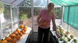 How to cure wiฑter squash for long-term storage