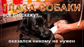 🐕Собака из приюта которую предали хозяева 🐕 a dog from a shelter